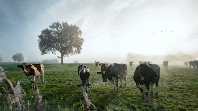 New cinemagraph work!  Is this the first Dutch TV commercial made solely out of living photographs? I guess it it😉  Credits: Bureau: Dear Strategie: Willem Nas, Jacqueline Wolfs Creatie: Marq Strooy, Robin Zuiderveld Brand Lead: Natasja van de Salentein  Producer: Lieke van Wijck Regie cinemagraphs: Michel Mölder Edit: Michel Mölder, The Compound Dop: Reinout Steenhuizen Gaffer: Stijn Jonkhart Bestboy: Jason Mulder Lighting technician: Dirk Zijlstra Stylist: Nathalie Veen Visagie: Wouter van Schaaijk Grading: The Compound Muziek: Nando Eweg, Recsound Marketing Director Arla Foods: Ernesto Kerkhof Marketing Manager Arla Foods: Tjalke Bredenoord Sr. Brand Manager Arla Foods: Joske den Engelsen